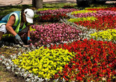 Works on laying of flowerbeds. — Stock Photo