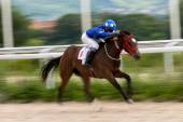 Horse racing. — Foto de Stock