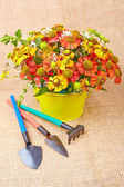 Bouquet of red flowers (Helenium) and garden tools  on an canvas — Stock Photo