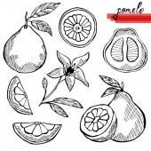 Pomelo fruits set — Stock Vector