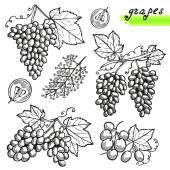 Grapes set — Vector de stock