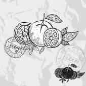 Hand drawn fruits — Stock Vector