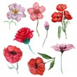 Постер, плакат: Watercolor flowers set