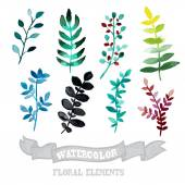 Watercolor floral elements — Stock Vector