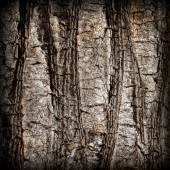 Gebarsten schors van oude tropische palmbomen. — Stockfoto