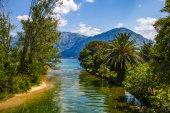 Rozhledny - řeka palmy a moře — Stock fotografie