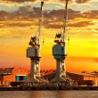 The cranes at sunset — Stock Photo #61797555