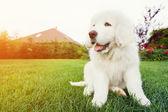 Cute white puppy dog — Stock Photo