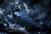 Black raven in moonlight perched on tree — Foto Stock