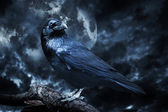 Black raven in moonlight perched on tree — Stock Photo