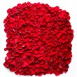 Red rose petals background — Stock Photo #58091201