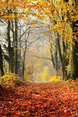 Autumn, fall forest. — Stock Photo