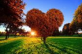 Καρδιά σχήμα δέντρο — Φωτογραφία Αρχείου