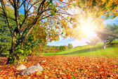 Autumn, fall landscape with a tree. — Stock Photo