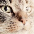 Cute magnetic cat eyes — Stock Photo #65445451
