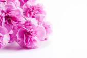 Rosa mjuka våren blommor bukett — Stockfoto