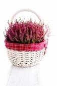 Basket full of heather — Foto de Stock