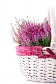 Basket full of heather — Stock Photo