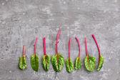 Fresh beetroot leaves — Stock Photo
