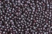 Bilberry berries — Foto de Stock