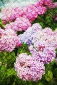 Double exposure of floral objects — Stock Photo