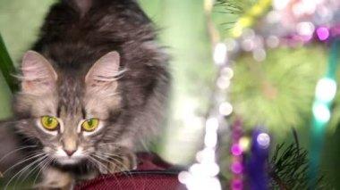 Cat near the Christmas tree — Стоковое видео