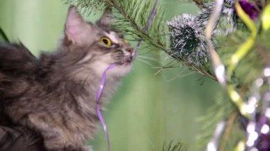 Cat near the Christmas tree — Stockvideo