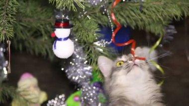 Cat near the Christmas tree — ストックビデオ