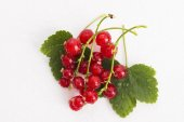 Red Currant close up — Stock Photo