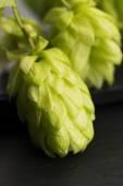 Fresh green hop cones — Stock Photo