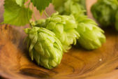 Fresh green hop cones — Stock Photo