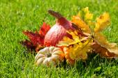 Pumpkins with fall leaves on the grass — Stock Photo