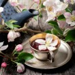 Tea cup with fresh flower blossoms — Stock Photo #73359849