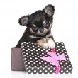 Chihuahua puppy in gift box — Stock Photo #62051973