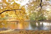 Beautiful fall — Stock Photo