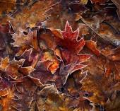Autumn leaves background. Shallow DOF — Stock Photo