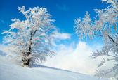 Albero congelato sul campo di inverno. Fondo del cielo blu — Foto Stock