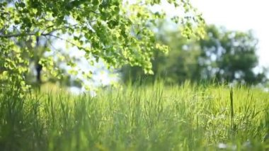 Summer park. Green grass, leaves and sunrays. Shot with motorized slider — Stock Video
