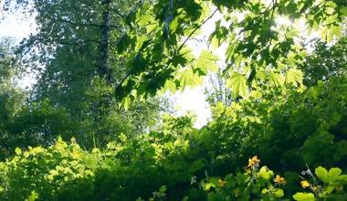Sun breaking through green leaves. Shot with motorized slider — Stock Video