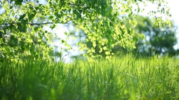 녹색 나뭇잎 arugula 근접 촬영 Hd 촬영 슬라이더의 — 비디오 #63611269