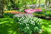 Colorful spring flowers in Holland garden Keukenhof, Netherlands — Stock Photo