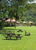 Jamaica. Benches for rest in park on a green lawn — Foto de Stock