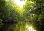 Tropical thickets mangrove forest on the Black river. Jamaica. — Stock Photo