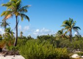 Morning on the tropical island — Stock Photo