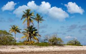 Tropical island. Coral fields and palm trees — Stock Photo