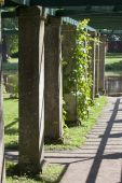 Pergola twined greens. Oranienbaum (Lomonosov). Upper park — Stock Photo