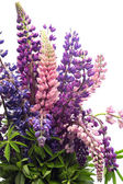 Bouquet of lupines — Stock Photo
