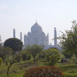 Taj Mahal in Agra, Uttar Pradesh, India. Look in a morning haze through a garden on the opposite river bank — Stock Photo #73461721
