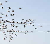 Birds on wire — Stock Photo