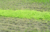 Mowed grass — Stock Photo